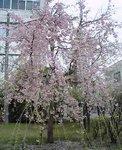 2006-0414-1205.jpg